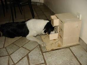 intelligenzspielzeug hunde selber machen